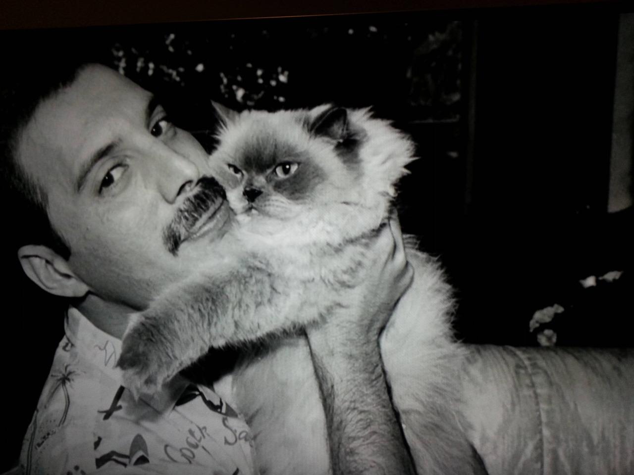 Freddie Mercury - Living On My Own — слушать песню и